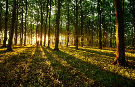 bosque_sostenible